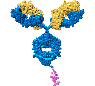 Bifunctional Fusion Protein